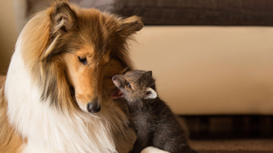 Fox And The Hound: Orphaned Fox Cub Finds Surrogate Mum In Dog