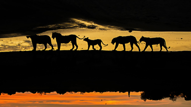 Wild animals across africa beautifully captured in silhouette