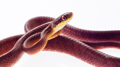 Snake-obsessed Photographer Snaps Portraits Of Deadly Creatures