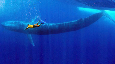 Blue Whale Drone Footage: Swimming With The World's Biggest Animal