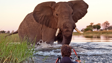 Jumbo Encounter: Photographers Shooting River Flowers Get Confronted By A Magnificent Elephant