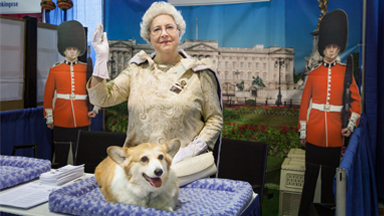 Dressed In Show! Devoted Owners Model For Their Dogs