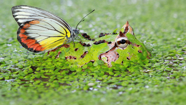 Froggy Style: Butterfly Hops Onto Camo Frog