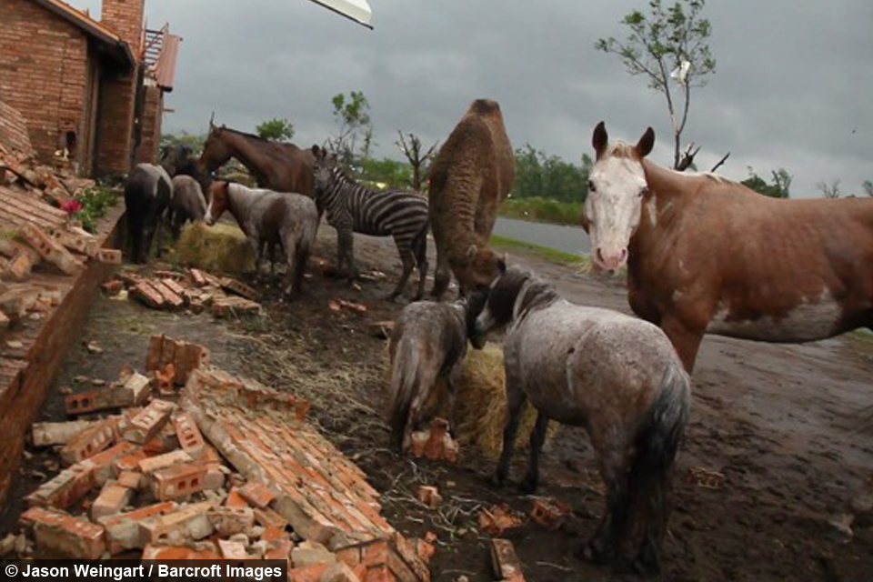 Storm Chaser Rescues Horse From A Tornado