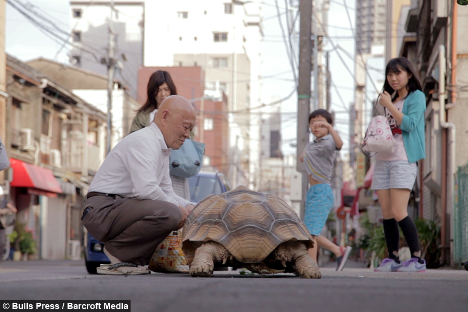 One Man And His Pet Tortoise - Man walks pet tortoise through tokyo