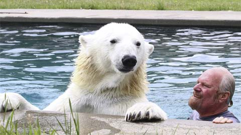 UN-BEAR-LIEVABLE! Man swims with polar bear