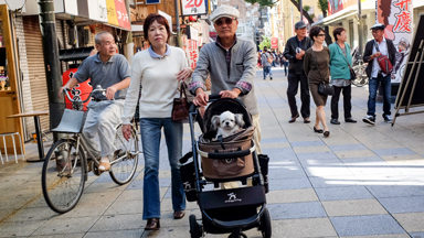 Barking Mad: Dog Owners Photographed Around Japan 'Walking Their Dogs'