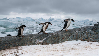 Unhappy Feet: The Penguins Dealing With Climate Change