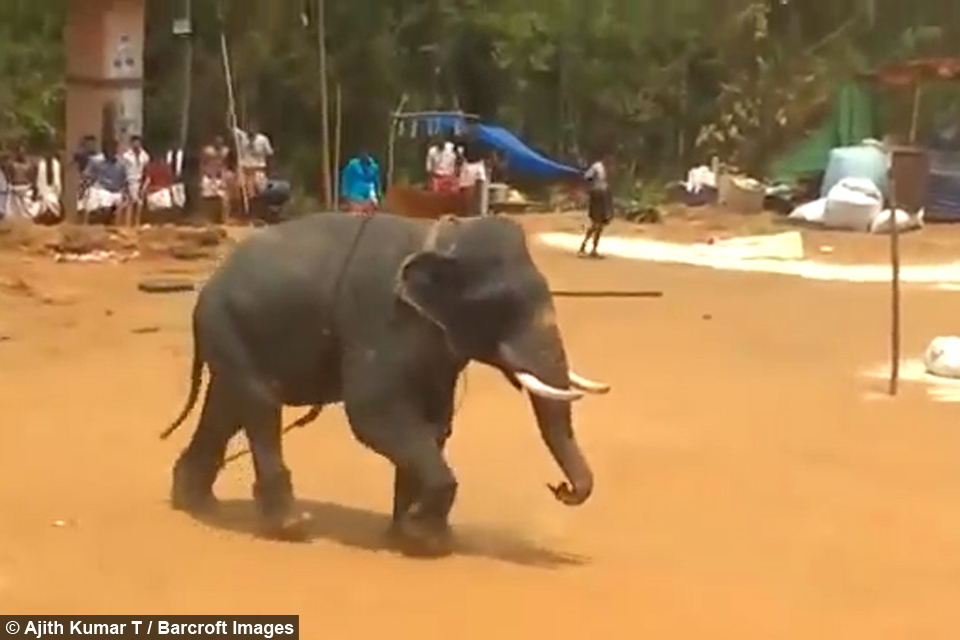 Assez Angry Elephant Flips Over Car FE48