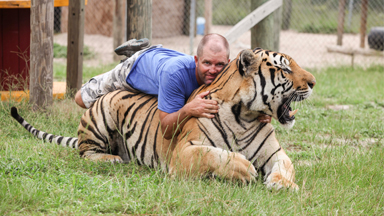 THAT'S GRRRRRREAT! Big Cat Enthusiast Wrestles with Tigers and Lions to raise awareness about the endangered species