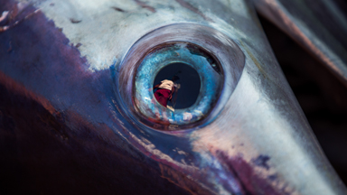 The Tale of Two Swordfish: Italian Fishermen Hunt for Swordfish Couples
