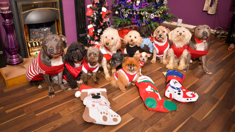 12 Dogs of Christmas: Owner Plans Christmas Spree For Her 'Fur Babies'