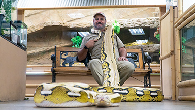 'Snake God' Wrestles 20ft Pythons