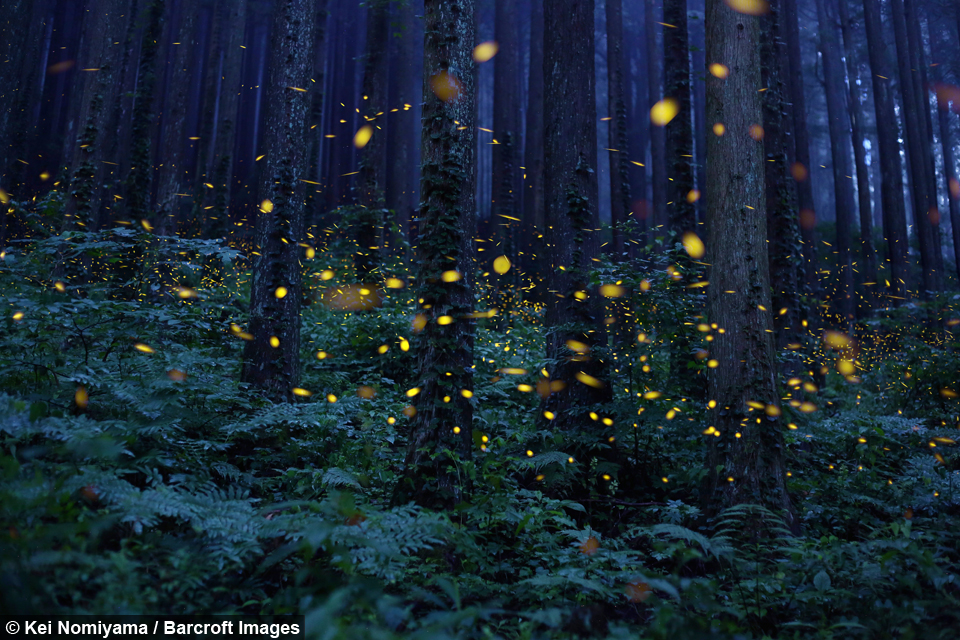 Small Japanese Garden likewise Micro House furthermore William Kates Anniversary Us Palace Castle in addition Thousands Glowing Fireflies Create Enchanted Forest Shikoku Japan likewise New Approaches Apartment Living Japan. on smallest house in japan