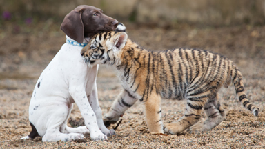 Hunter Games: Tiger & Dog Are Best Friends