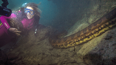 Adventurer gets up close and personal with giant anaconda