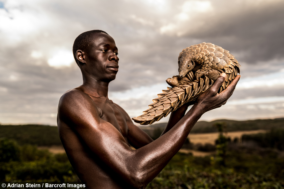 The 'Pangolin Men' Are Saving The World's Most Trafficked Mammal