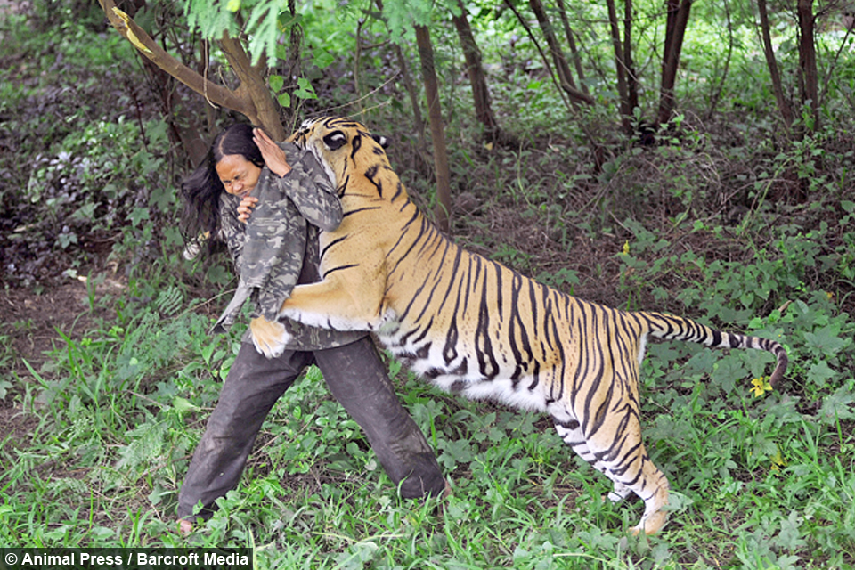 You re Grrrrrrreat Man s Unbreakable Bond With Bengal Tiger