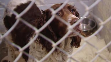 Breeder | Animal Cops Houston