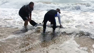 Let Off The Hook: Snagged Great White Shark Rescue