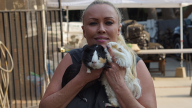 The Woman Who's Rescued Thousands of Guinea Pigs