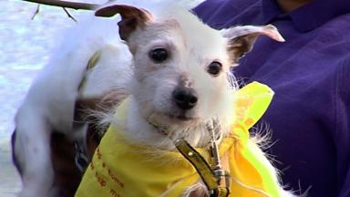 Dog Rescue - Ep.4