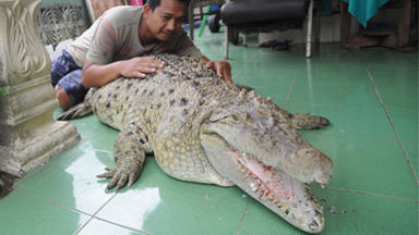 Our Family Pet Is A Six Foot Croc