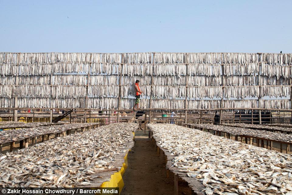 Life Inside Bangladesh S Biggest Dried Fish Yard