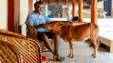 Mini-Mooer! The World's Shortest Cow Is Udder Three Foot
