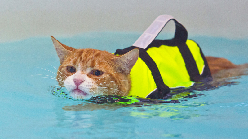 Soggy Moggy: Pet Cat Tests New Feline Hydrotherapy Treatments