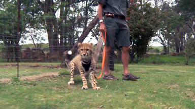 Me And My Cheetah: Rescued Big Cat One of the family