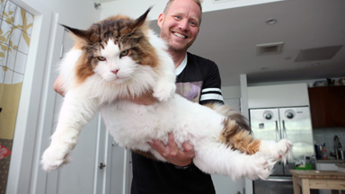 New York's Biggest Cat Is Making A Name For Himself
