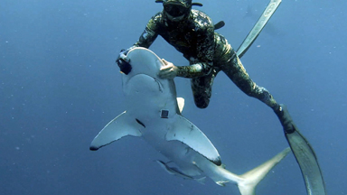 Diver Removes Fishing Hook From Mouth of Hypnotised Shark
