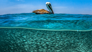 What Lies Beneath: Stunning Seascapes Capture Life Above And Below The Waves