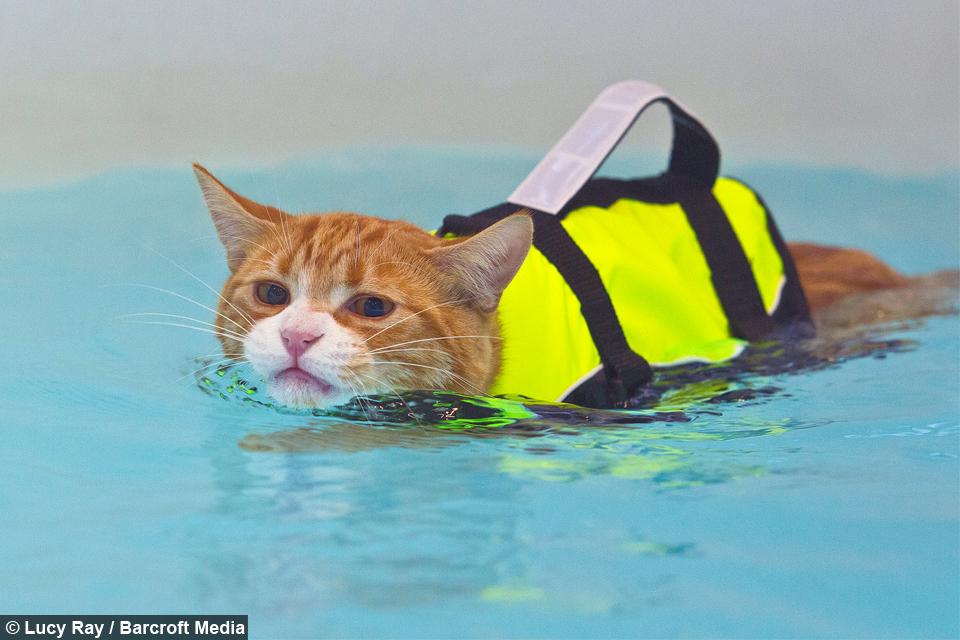 Idroterapia per gatti 9af9adf6-768d-4792-b193-d8d2342b19e3