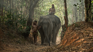 Inside Thailand's Elephant Village Where Locals Tamed Wild Elephants