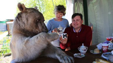 Bear About The House: Living With My Supersized Pet
