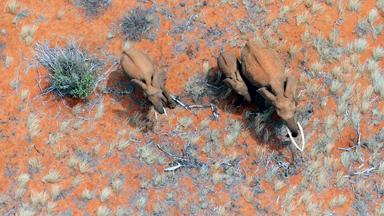 Stunning Birds-Eye Views Of Wildlife In Southern Kenya