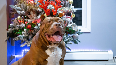 Merry Hulkmas: A Dog Dynasty Christmas Special