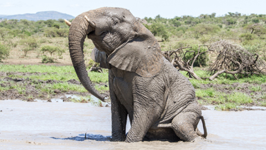 Muddy brilliant: Elephant splashes in water for the first time in months during drought in South Africa