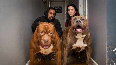 Kong: The 150lb Pitbull Puppy Set To Outgrow Hulk
