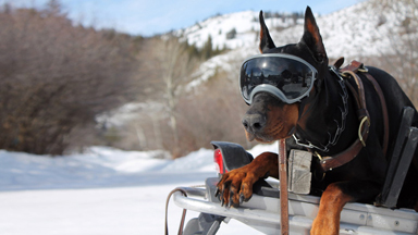 Rex Specs: Protective Dog Goggles Are A Hit With Rescue Services