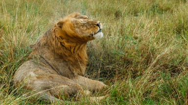 Exploring Africa's Magic: Lazy Lions Relax Under Colourful Rainbow