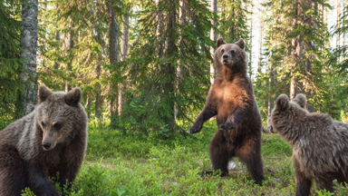 The Bear Experience: Up close and personal with a horde of bears