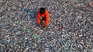 Life Inside Bangladesh's Biggest Dried Fish Yard