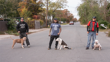 The MMA Fighter Saving New York's Pitbulls