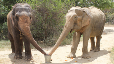 Rescued Circus Elephant Reunited With Lifelong Friends