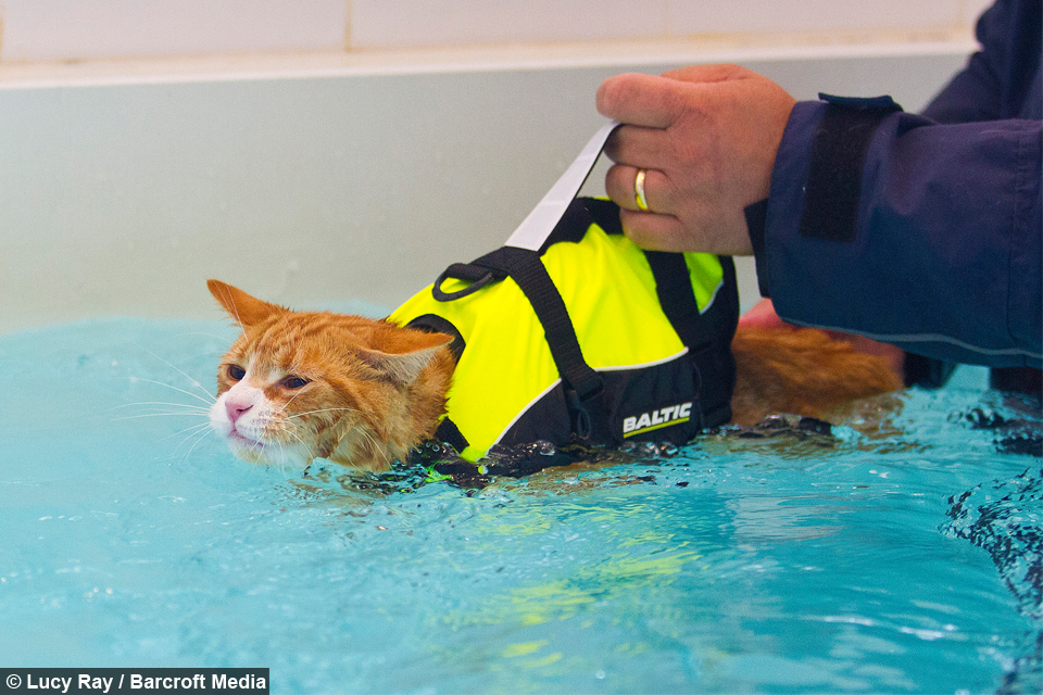 Soggy Moggy Pet Cat Tests New Feline Hydrotherapy Treatments