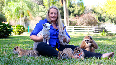 Baby Animal BFFs: AdorableTiger, Kangaroo And Gibbon Raised Together In Florida Zoo