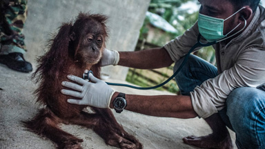 Destroying The World's Lungs: Devastating Effect of Palm Oil On Indonesian Rainforest
